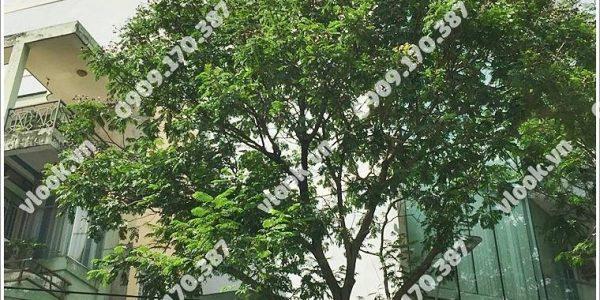 Cao ốc cho thuê văn phòng Climax Building Cao Thắng, Phường 12, Quận 10, TP.HCM - vlook.vn