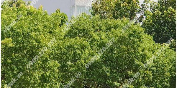 Cao ốc cho thuê văn phòng Vadoland Building, Võ Văn Kiệt, Quận 5, TPHCM - vlook.vn