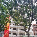 Cao ốc văn phòng cho thuê 85 CMT8 Building, Cách Mạng Tháng Tám, Quận 1, TP.HCM - vlook.vn