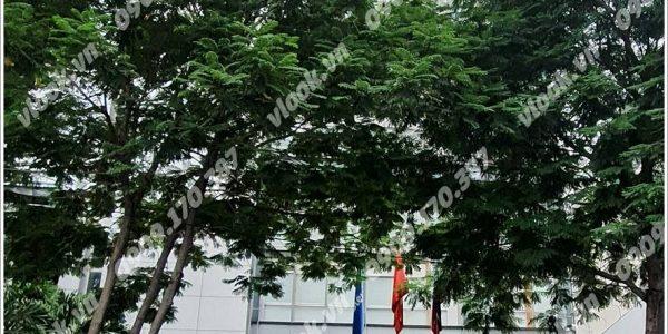 Cao ốc cho thuê văn phòng tòa nhà Siêu Việt Building, Trần Cao Vân, Quận 1, TPHCM - vlook.vn